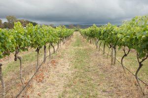Summit Wines Stanthorpe