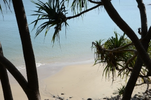 Campervan Converts - Noosa National Park