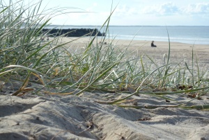 Campervan Converts - Noosa beach